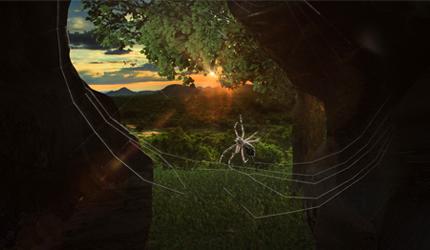 Сила у малом – мува и паук