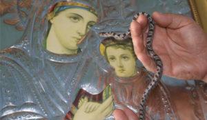Поново се појавиле змије у цркви на Кефалонији